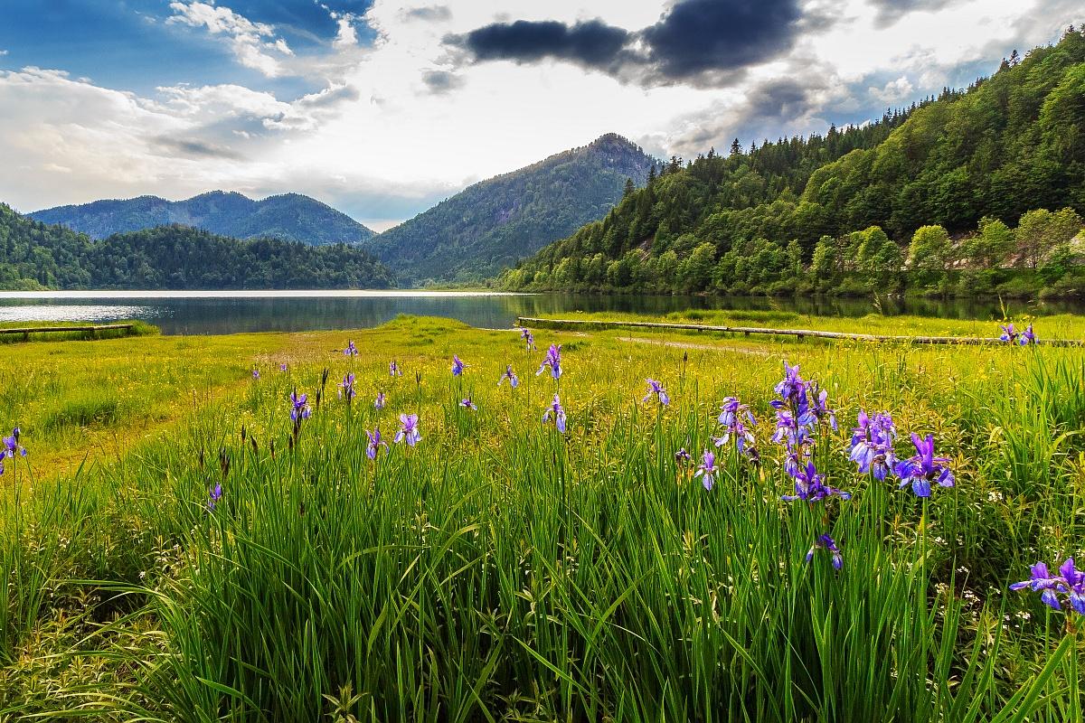Urlaub im Chiemgau - Lilien am Weitsee © Stefanie Raab